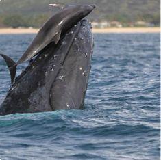 野生動物の背中に別の動物が乗っていると、「奇跡の瞬間」と思いたくなるが、実際はそう珍しいことではないという。他の動物の背中に乗る理由はなんだのだろうか。