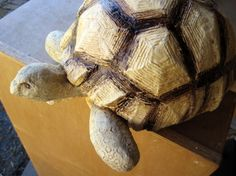 Texture!  Tortoise Sculpture, Stage One | Ultimate Paper Mache
