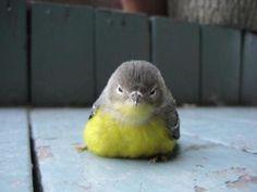#cutie #Baby #bird