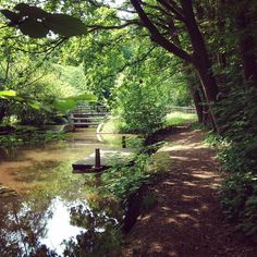 Plimbare prin paduri olandeze - Sellingerbos #Sellingen #Westerwolde #Olanda