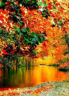 Beautiful Lake ~ Dreamy Nature