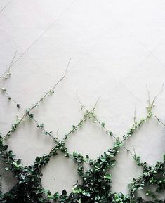 Vines are plants that exhibit a climbing ot trailing habit. Vines look nice for the garden and are easy to maintain. Learn about the various types of vines. Dream Garden, Garden Projects, Garden Ideas, Backyard Ideas, Patio Ideas, Courtyard Ideas, Courtyard Gardens, Fence Ideas, Garden Inspiration