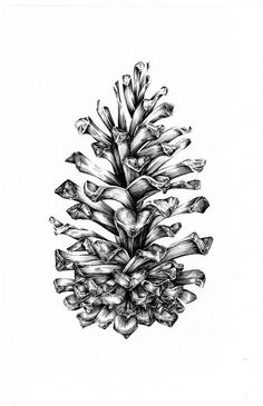 corn tree drawing - Google Search