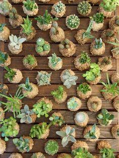 Unique Kokedama Ball Ideas for Hanging Garden Plants - Home Decor Ideas Succulent Gardening, Cacti And Succulents, Planting Succulents, Hanging Plants, Indoor Plants, Diy Jardin, String Garden, Moss Plant, Jade Plants