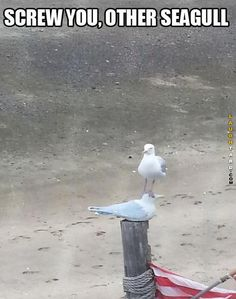 Screw you other seaguls