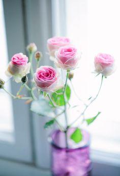 Delicate roses, photo by Petra Veikkola