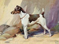 SMOOTH FOX TERRIER STANDING DOG LOVELY LITTLE DOG PRINT