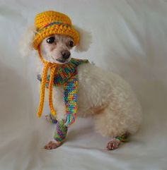 Dog Clothing - Hat, Scarf, and Leg Warmers - size X-Small. $12.95, via Etsy.