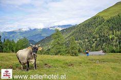 Unberührte Naturlandschaften in Nauders in Tirol erleben Bergen, Cow, Mountains, Nature, Travel, Animals, Summer Vacations, Hiking, Pictures