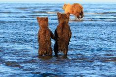 Waiting for mother bear to bring in a fish supper.