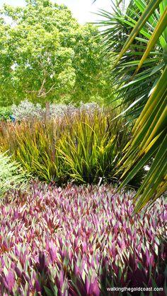 Lovely landscaping at the Botanic Gardens Gold Coast Planting, Gardening, Gold Coast Australia, Exotic Plants, Botanical Gardens, Outdoor Gardens, Parks, Landscaping, Flowers