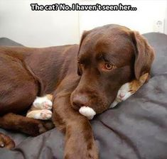 """The Best Funny Animal Memes This is so precious, Heather!! Looks like Gracie and a """"friend"""" Luv y'all Aunt Nell & Uncle George"""