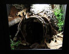 tarantula enclosure made with bark and foam, etc.