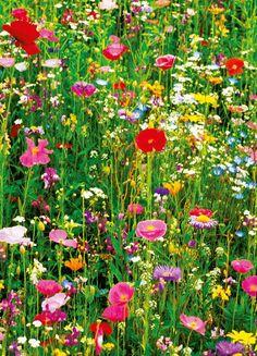 Blumenwiese Anlegen | Garten | Pinterest Blumenwiese Anlegen Garten