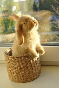 #Cuteness in a basket #Bunny #Rabbit #Animals