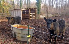 how-to-start-a-cattle-farm