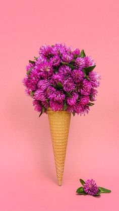 colourful flowers and blossom in ice-cream cone on pink background, colourful photo, still life photography Ice Cream Flower, Cream Flowers, Amazing Flowers, Pretty Flowers, Spring Photography, Photography Flowers, Colour Photography, Life Photography, Flower Crafts