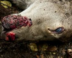Save New Zealand's animals from torturous 1080 poison deaths! - The Petition Site