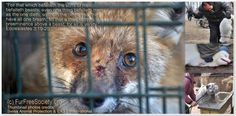 His Holiness, the Pope: Your Holiness, please educate your followers concerning the Cruelty of Fur