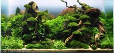 2011 AGA Aquascaping Contest - Entry #328