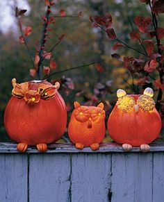 cutest pumpkins ever