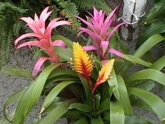House Plants, How to Grow and Care for a HousePlant - Garden ...