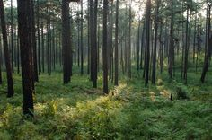 Weymouth Woods Sandhills Nature Preserve in Southern Pines, NC