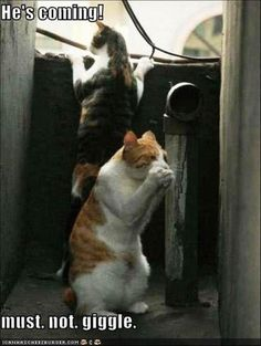 Funny Animal Picture Dump Of The Day 22 Pics Yes, our kitties love practical jokes. ..LOL