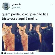 Q fofo kkk Animals And Pets, Funny Animals, Cute Animals, Top Memes, Best Memes, Chernobyl, Wtf Funny, Funny Memes, Comic Anime