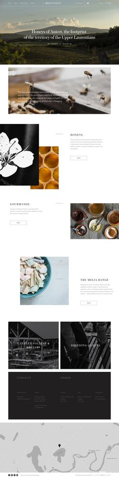 Miels D'Anicet website by Caserne