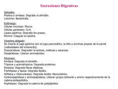 Secreciones Digestivas Salivales:   Ptialina o amilasa: Degrada el almidón.  Lisozima: Bactericida.  Estómago:   Células m...