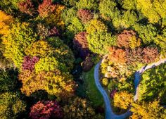 Aerial view of coloured treetops in The Acre Glade within The Garden House in Buckland Monachorum, Devon Colorful Trees, Geocaching, Aerial View, Four Seasons, Devon, Fields, Acre, Home And Garden, Pictures