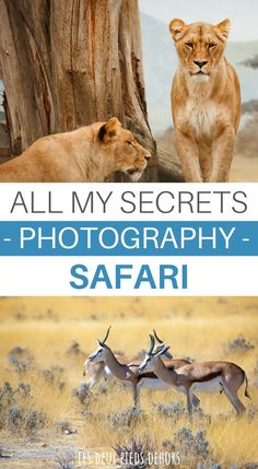 A few years ago, we had the opportunity to go on safari for ten days in Tanzania. Passionate about photography and travel, we offer you the best photography tips to take great pictures during your safari. Wildlife Photography Tips, Photography Basics, Photography Tips For Beginners, Photography Courses, Camera Photography, Photography Tutorials, Amazing Photography, Learn Photography, Great Pictures