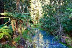 Redwood forest in Rotorua, New Zealand 🇳🇿 Redwood Forest, Travel Memories, New Zealand, Plants, Instagram, Plant, Planting