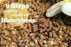 How to Get Started with Honeybees on The Prairie Homestead at http://www.theprairiehomestead.com/2014/05/get-started-honeybees.html#sthash.tGVjBiZX.dpbs
