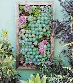 Succulent Wall Art:  Use a rectangular plastic tray divided into planting cells to display an enchanting succulent garden like this one.