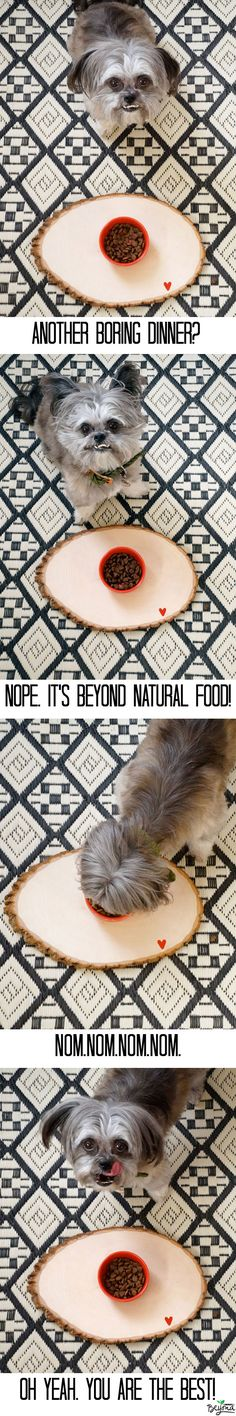 Learn more about Beyond Natural Pet Food by clicking through! Miles loves it! Natural Pet Food, Cat Food, Girls Best Friend, Dog Food Recipes, Fur Babies, Your Pet, Diys, Dog Cat, Puppies