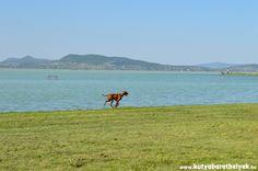 Nagy terület áll a kutyák és gazdik rendelkezésére Fonyódon Animals, Animales, Animaux, Animal, Animais