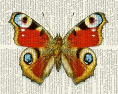 Butterfly - Peacock butterfly - printed on old page from vintage dictionary via Etsy