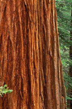 ✿ Tree Bark ✿