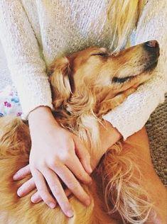 Dog And Puppies Art miss having a golden retriever.Dog And Puppies Art miss having a golden retriever. Cute Puppies, Cute Dogs, Dogs And Puppies, Doggies, Irish Setter, Cockerspaniel, Golden Retrievers, Mans Best Friend, Dog Life