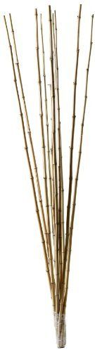 Boedika 68005 Tonkin Canes, 5-Feet by 1-Inch, Round, Bundle of 10 by Boedika. $28.50. Use indoors in a pot indoors for beautiful accents. Be creative using bamboo. Light, strong and durable. Outdoor uses include: in the garden as trellis, fencing, decoration, planting trees, palapas. A bundle of Tonkin bamboo poles can be used in many ways: in the garden as trellis, fencing, decoration, planting trees, palapas, etc. In the home as decorative filling for large ...