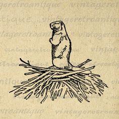 Printable Beaver Digital Image Animal Download Beaver Dam