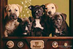 Doggy gang