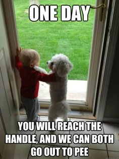101 Best Funny Dog Memes to Make You Laugh All Day - Funny Dog Quotes - 101 best funny dog memes One day you will reach the handle and we can both go out to pee. The post 101 Best Funny Dog Memes to Make You Laugh All Day appeared first on Gag Dad. Funny Dog Memes, Funny Animal Memes, Funny Animal Pictures, Cute Funny Animals, Funny Cute, Funny Dogs, Cute Dogs, Pet Memes, Funny Captions