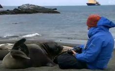 Daily Cute: World Explorer Meets a Friendly Seal