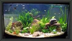 Cheap Fish Tank Decoration Ideas