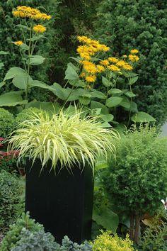 Japanese forest grass in a tall planter Dream Garden, Garden Art, Garden Design, Container Plants, Container Gardening, Ornamental Grasses, Shade Garden, Garden Inspiration, Garden Landscaping