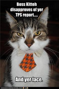 Boss kitteh disapproves of your TPS report and yer face.