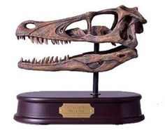 Take a look at this awesome skull available for sale right here at Dinosaurfossil4u for $58.99  http://www.dinosaurfossils4u.com/velociraptor-skull/  #Skull #Dinosaur #Fossil